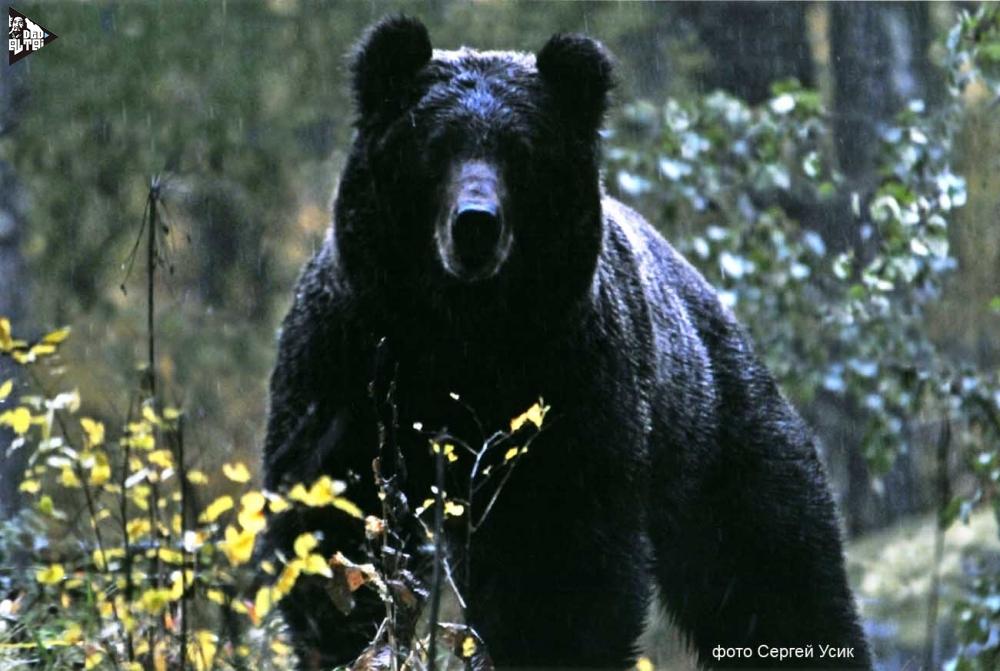 Наши медведики Information_items_1238605816